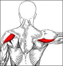 Torn Deltoid