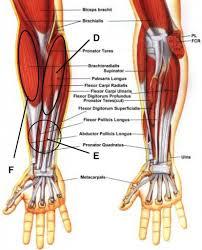 Forearm Tendonitis