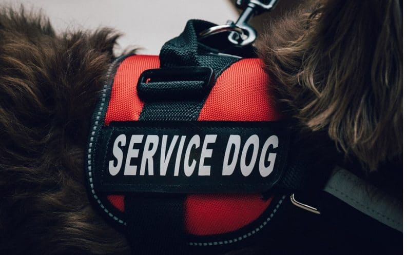 emotional support service animal