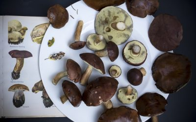 Six Benefits Reishi Mushrooms Have